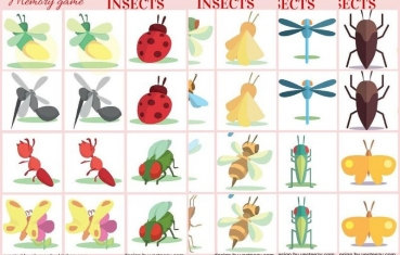 Insects - Memory game free printables