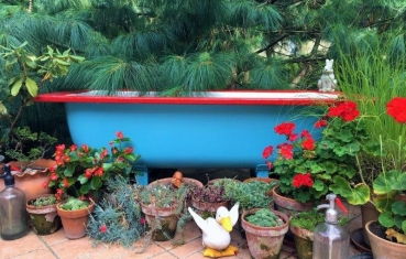 DIY Bathtub Pond