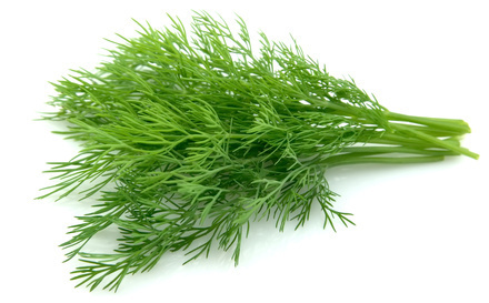 dill,weed,health,benefits
